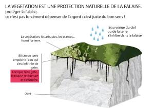 falaise-vegetation
